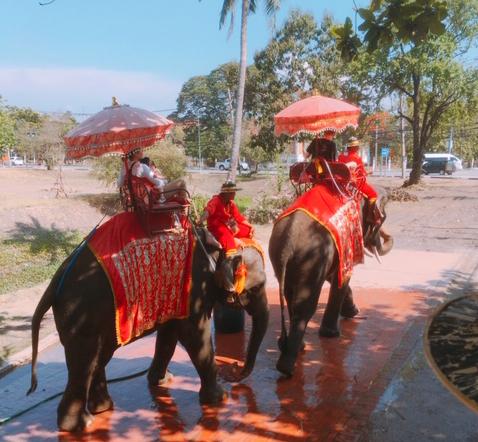 タイ 象に乗る