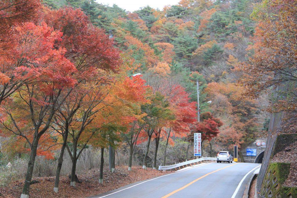 紅葉ドライブ 芦有ドライブウェイ