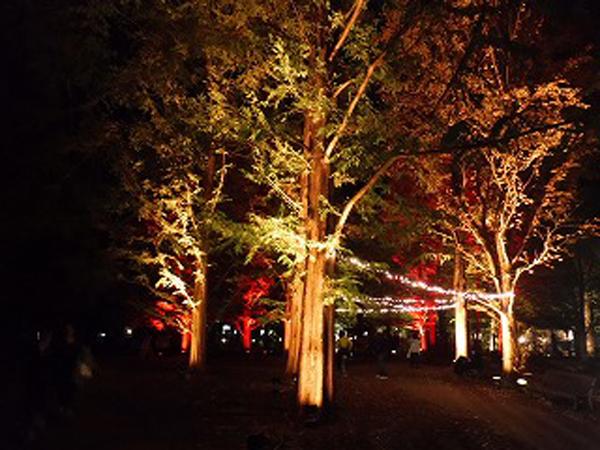 紅葉ライトアップ 神戸市立森林植物園